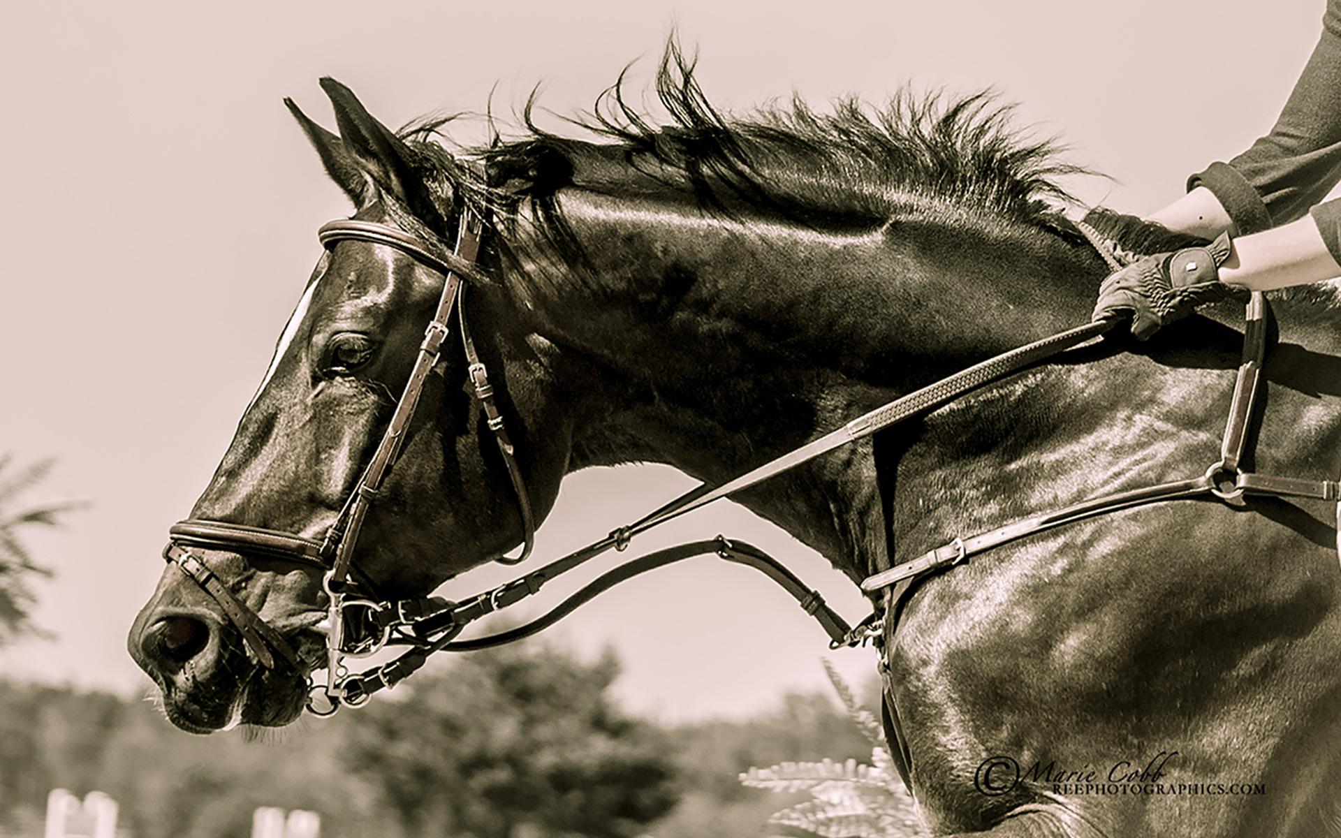Full Screen Jumping Horse